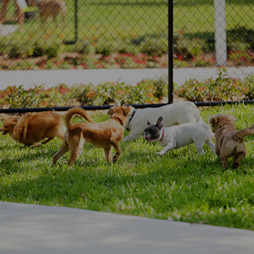 Large Dog Park at Parkwood Apartments